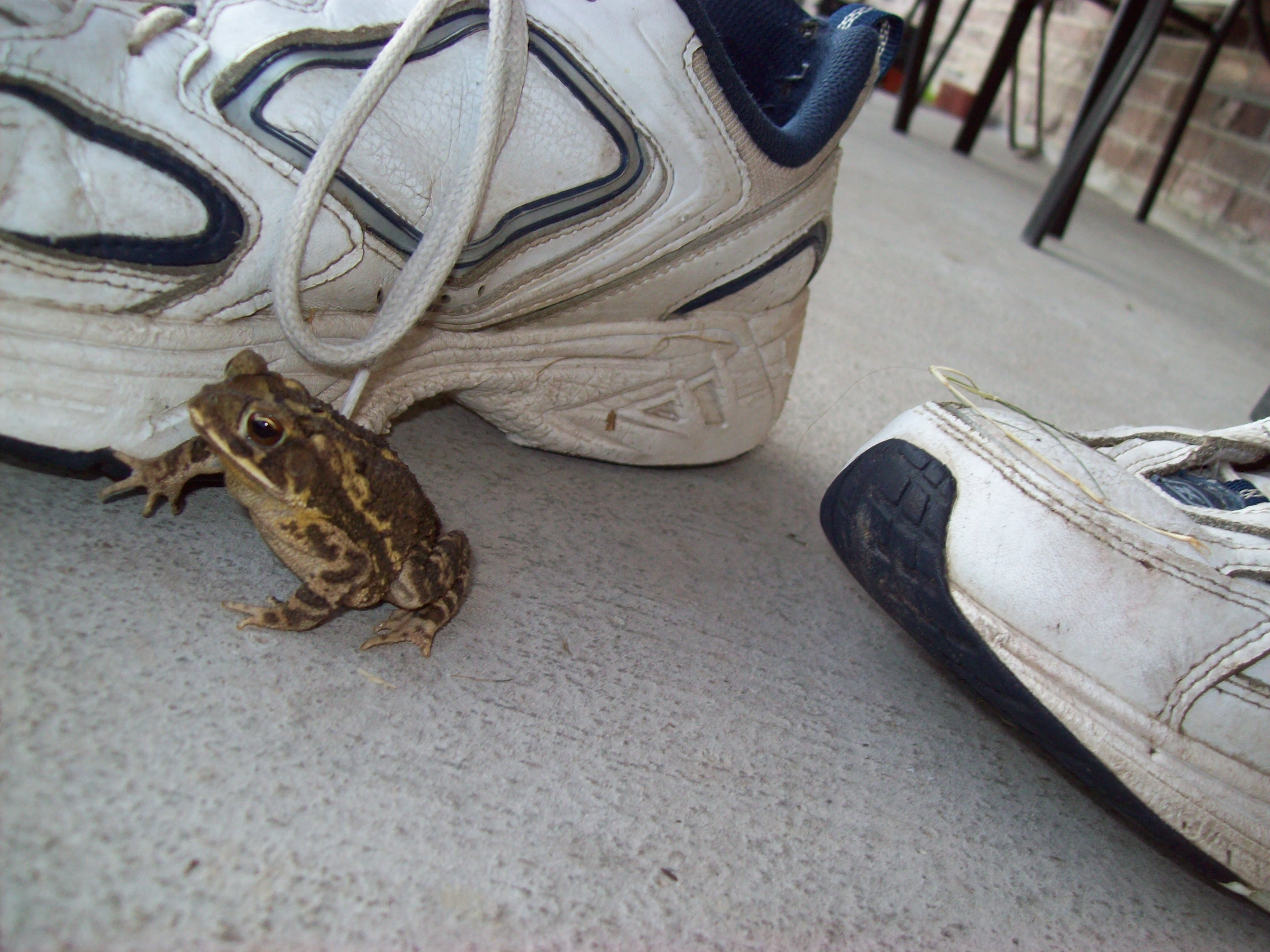 The frog and the shoe