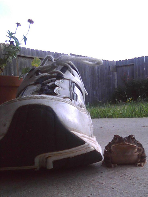 Then the frog pretends to be a shoe as he sizes me up.