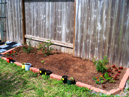 A shot of the flowerbed, week two.