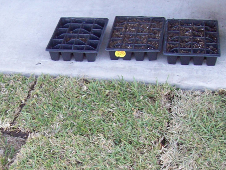 From April 8, 2009: Three seedling trays next to some new grass we planted.