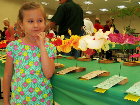 Corina looks at hibiscus flowers ready to be judged.