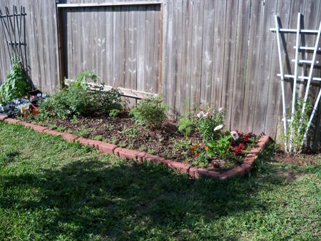 Here's a shot from yesterday of my original bed. Lots of growth to note, and a trellis was saved from the curbside on trash day - thanks to Kim. More on that later, I'm sure.