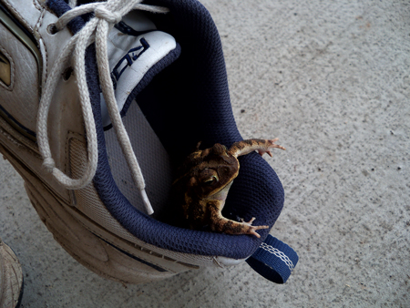 There's a frog in my shoe!