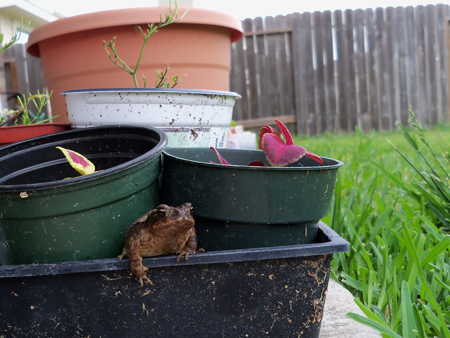 Best frog photo ever?