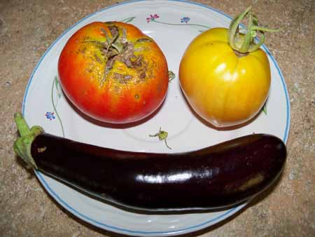 Harvested two beef maestro tomatoes and more eggplant.