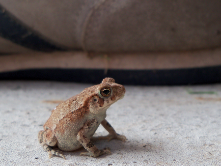 There's a ton of adolescent frogs back there, like this guy, who have grown up in the backyard. They hate it when I mow the lawn.
