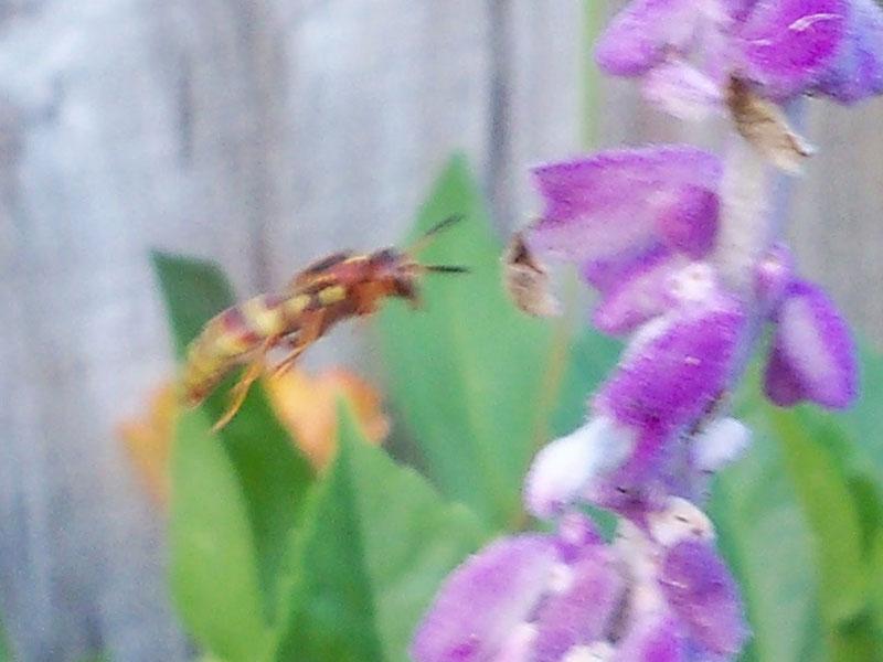 Random wasp