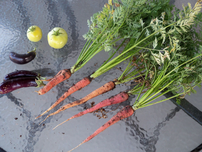 Carrots! Picked on May 30.